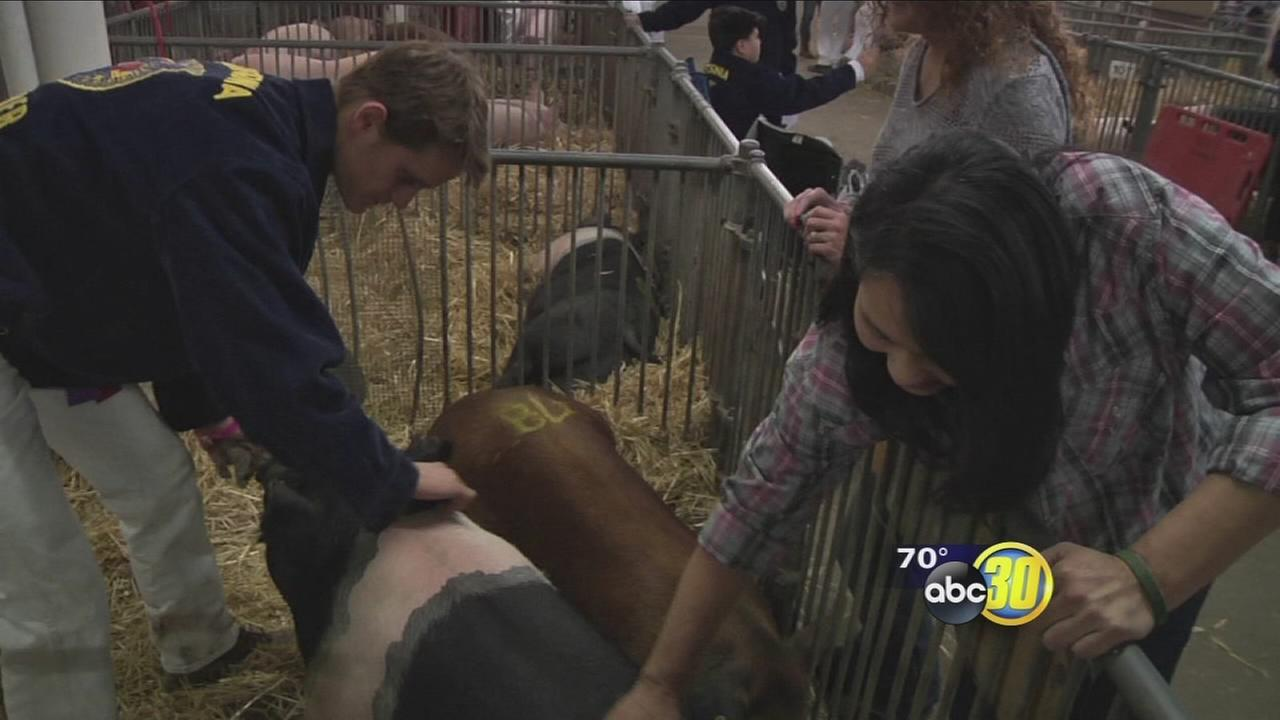 Teen farmer donates cash from animal auction to help injured correctional officers