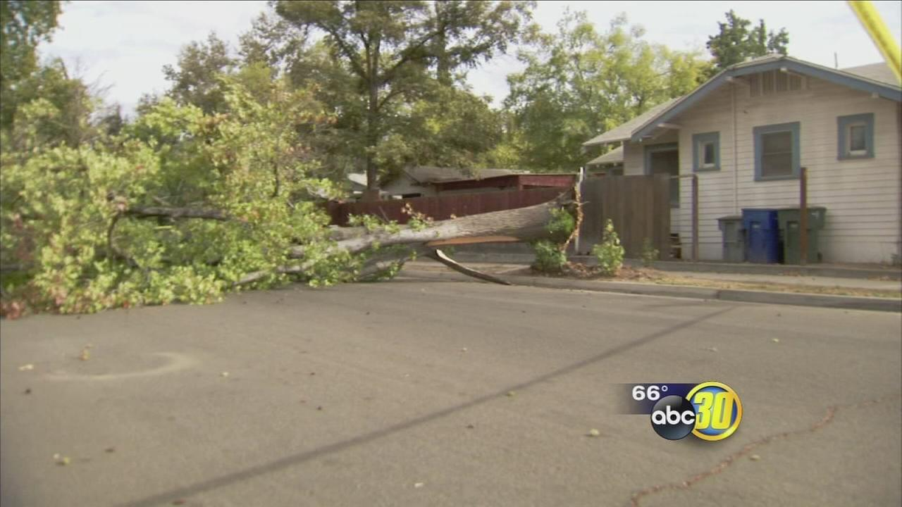 Strong winds topple trees across Fresno