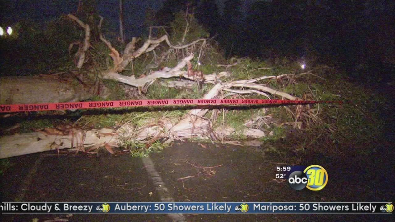 Large tree falls in Northwest Fresno