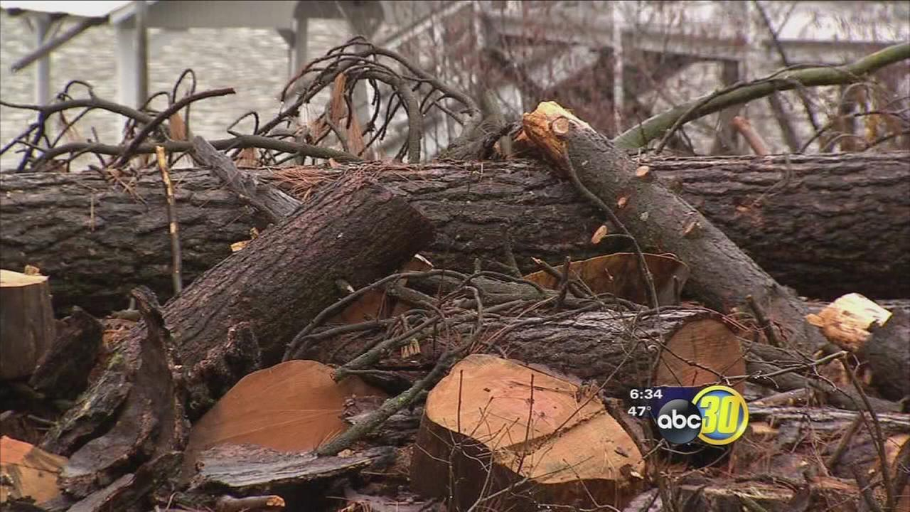 Dead tree problem in the Sierra has been turned into a hazard by storm