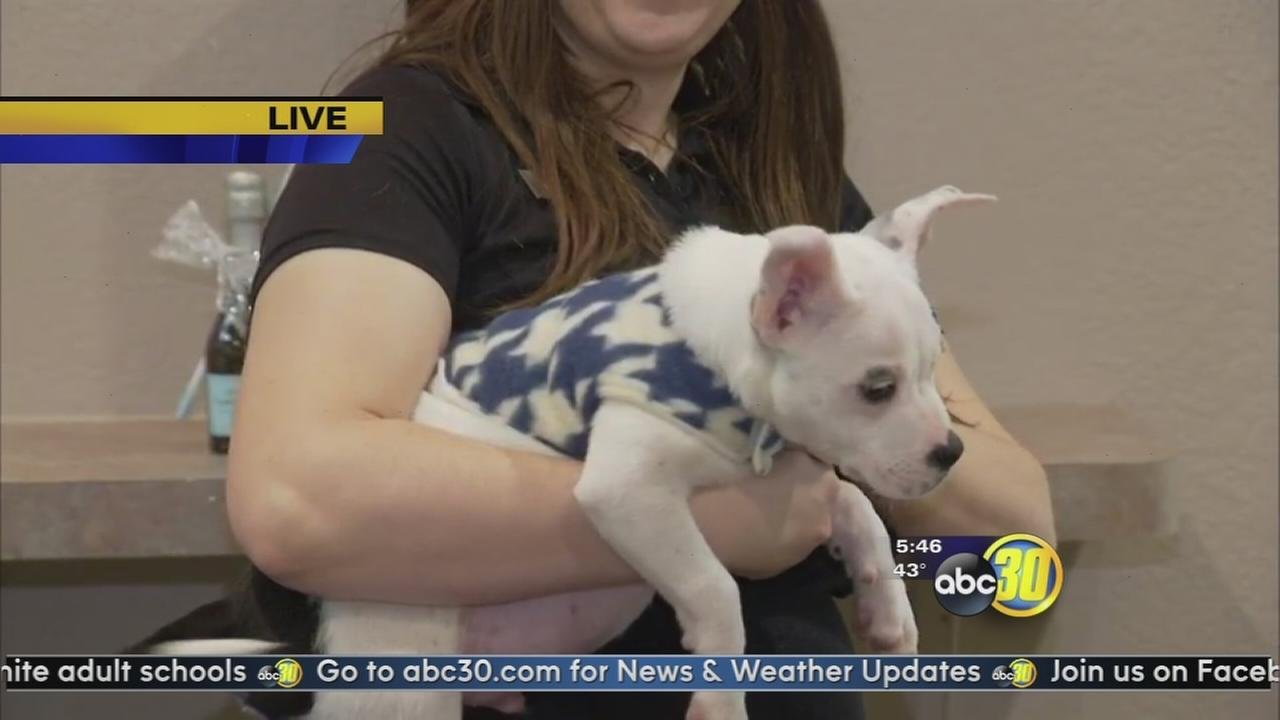 Local shelter gives pet owners a few tips to help keep pets safe in the cold