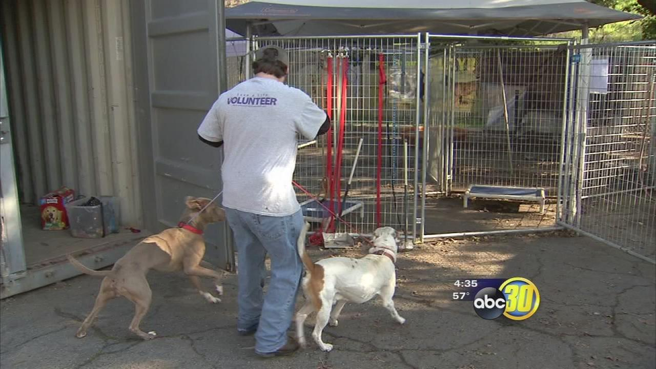 Fresno Humane Society Telling Pet Owners To Keep Pets Safe And Dry
