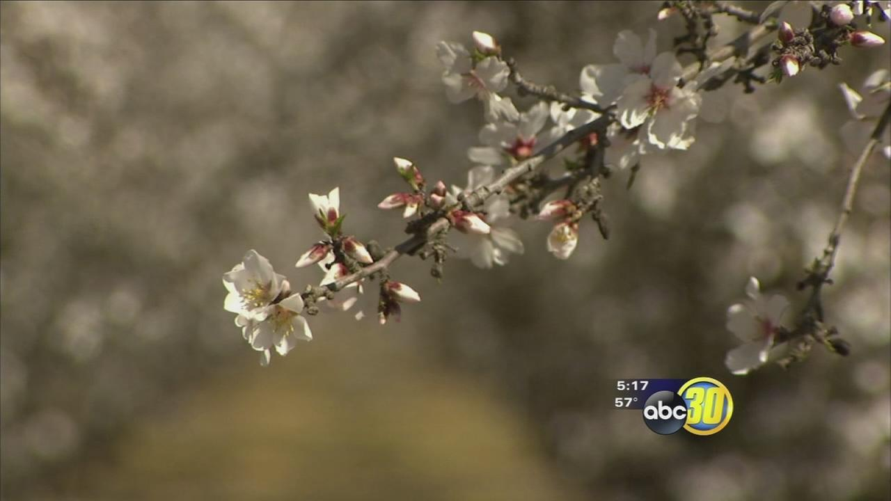 Ice cream company wants to make sure bees in the Valley stay healthy to keep blossoms blossoming