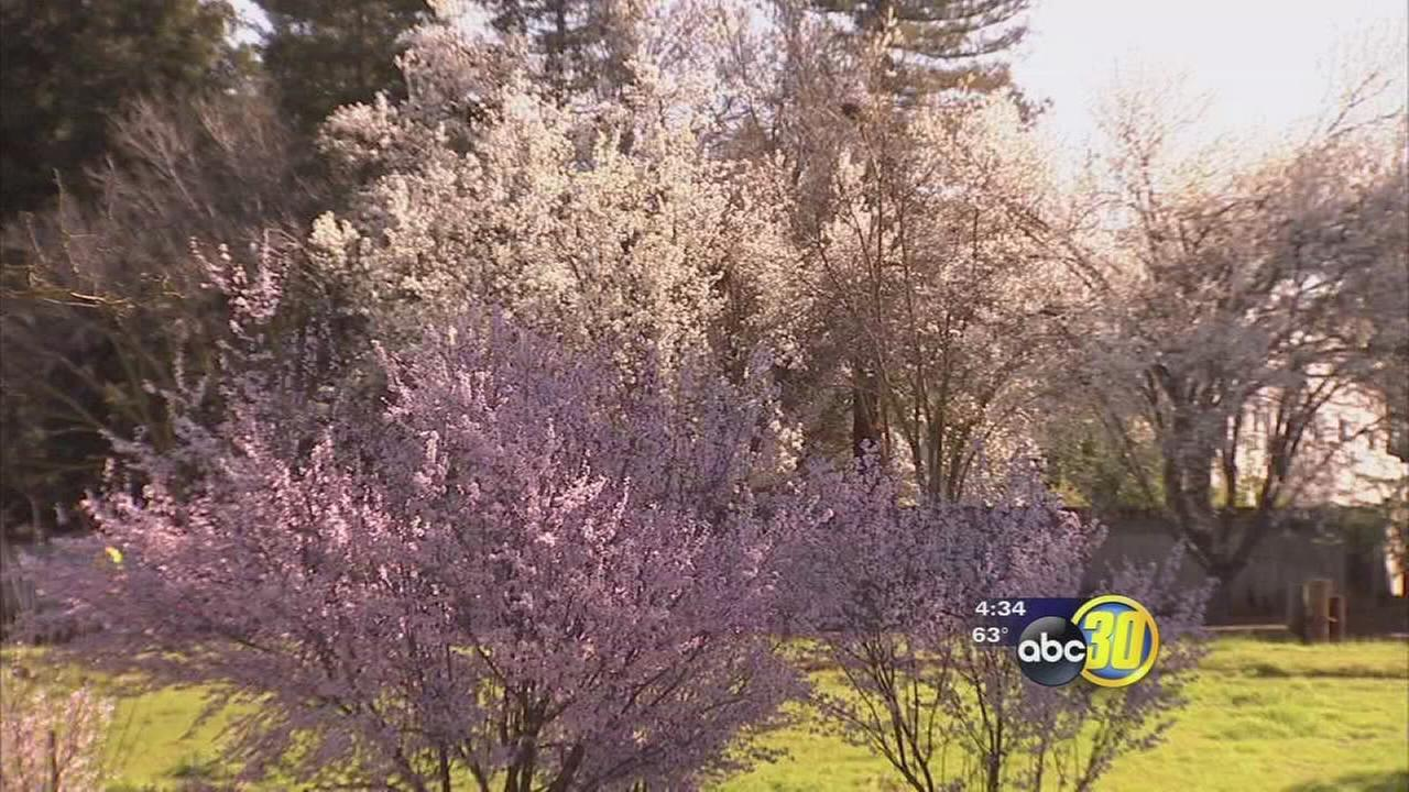 Seasonal allergy sufferers feeling the change in weather