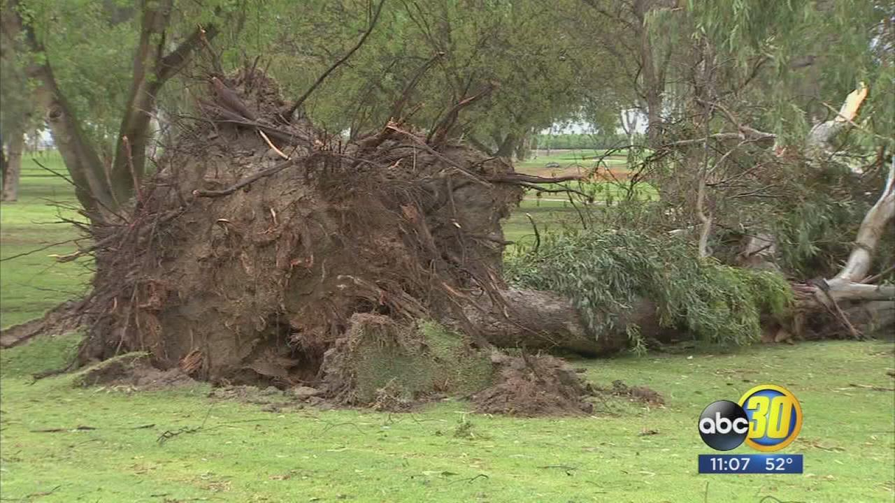 Tulare residents describe golf course as war zone after thunderstorm uproots trees