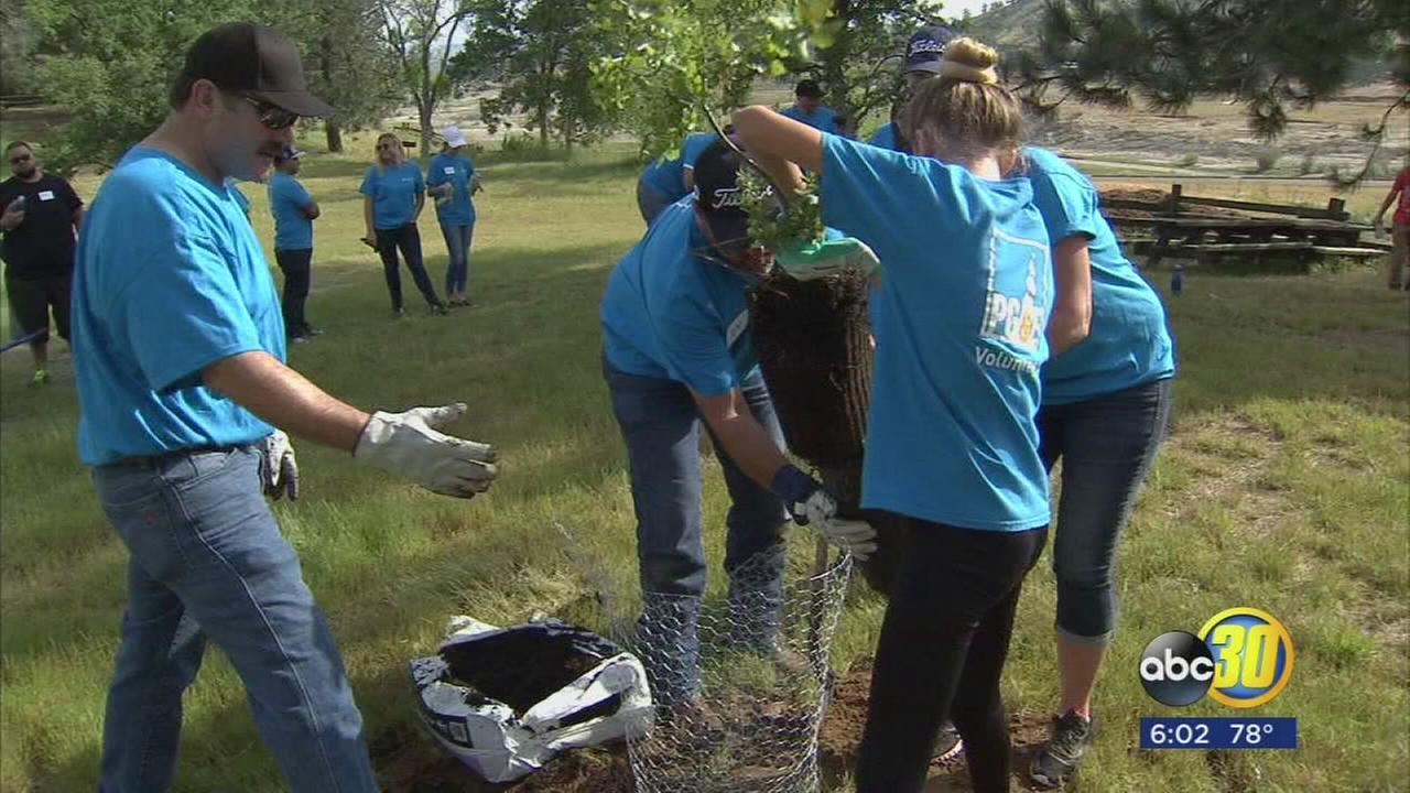 PG&E crews plant trees at Millerton Lake in honor of fallen employee