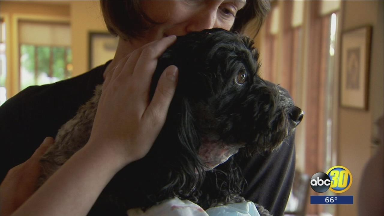 Woman and her dog recovering after being attacked by a pit bull in East Central Fresno