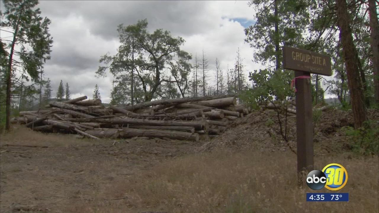 Some Sierra National Forest campgrounds remain closed due to tree mortality