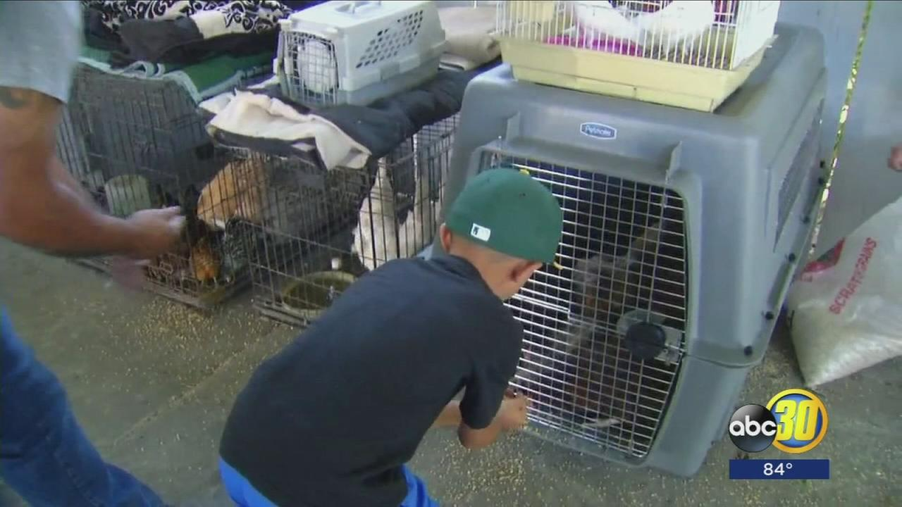 Community bands together to help furry and feathered evacuees from Detwiler Fire