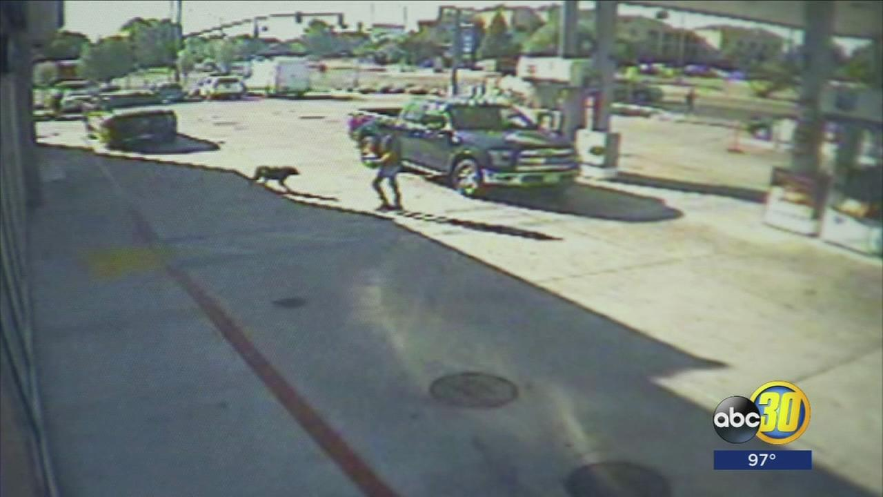 North Valley family?s dog stolen from convenience store, but man who took the pooch claims it wasnt theft