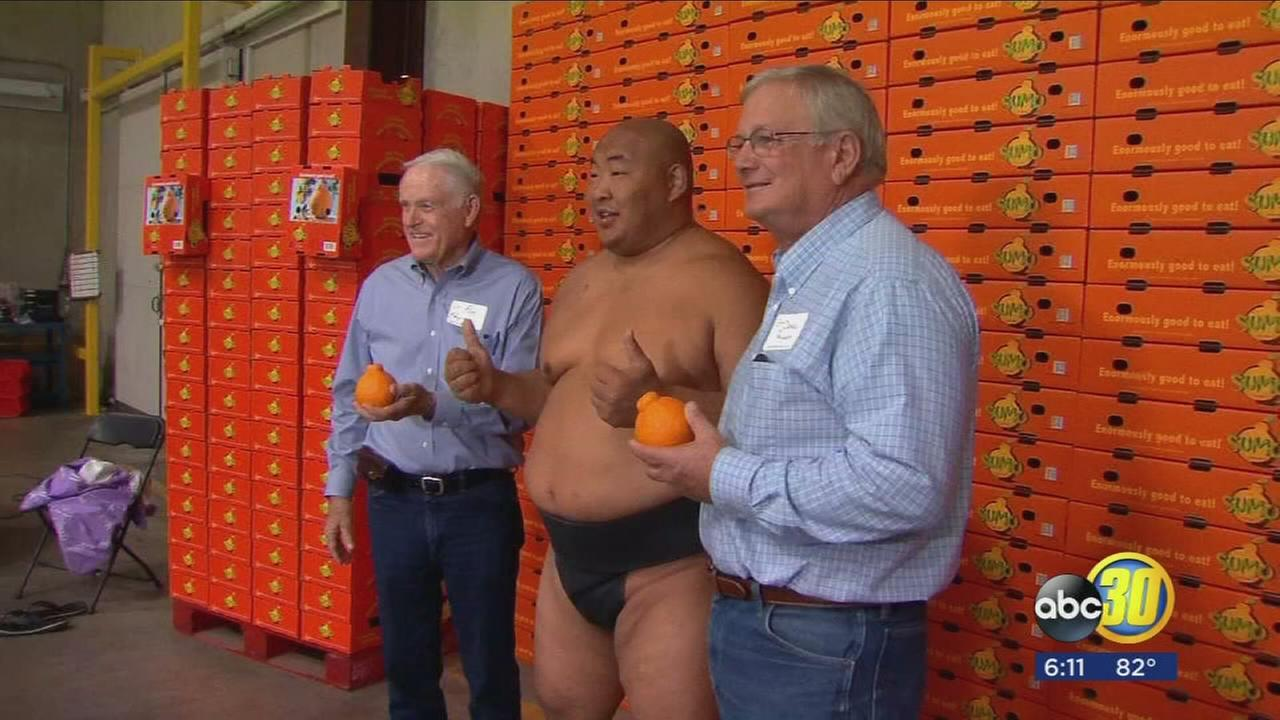 Valley citrus company enlists champion sumo wrestler to help with marketing