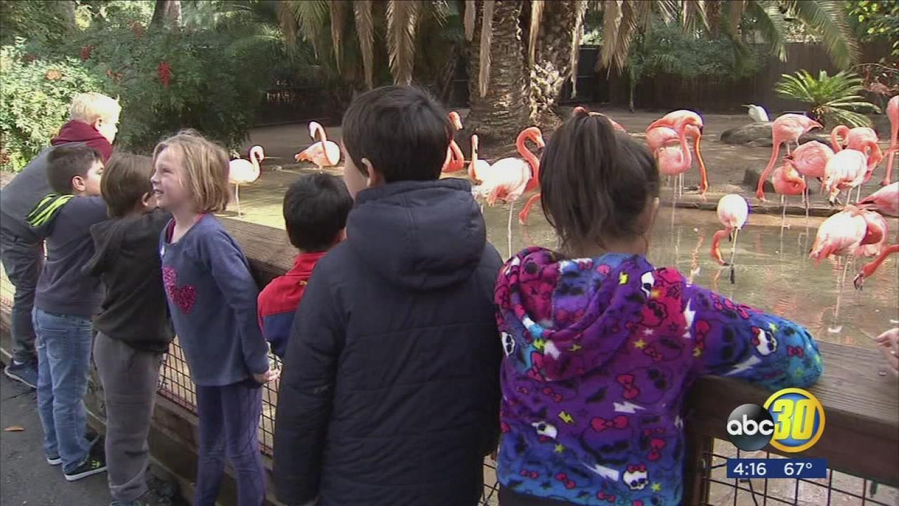 Valley Children are spending their Thanksgiving holiday on the wild side