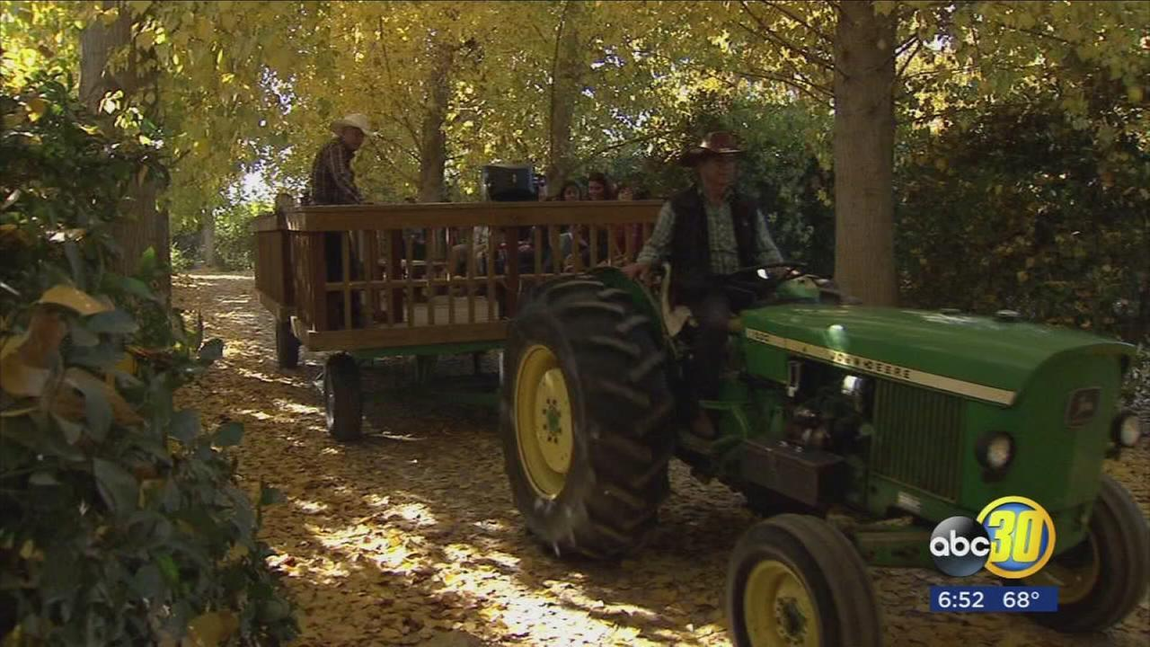 South Valley Farm takes steps to become a nonprofit and educate community about farming