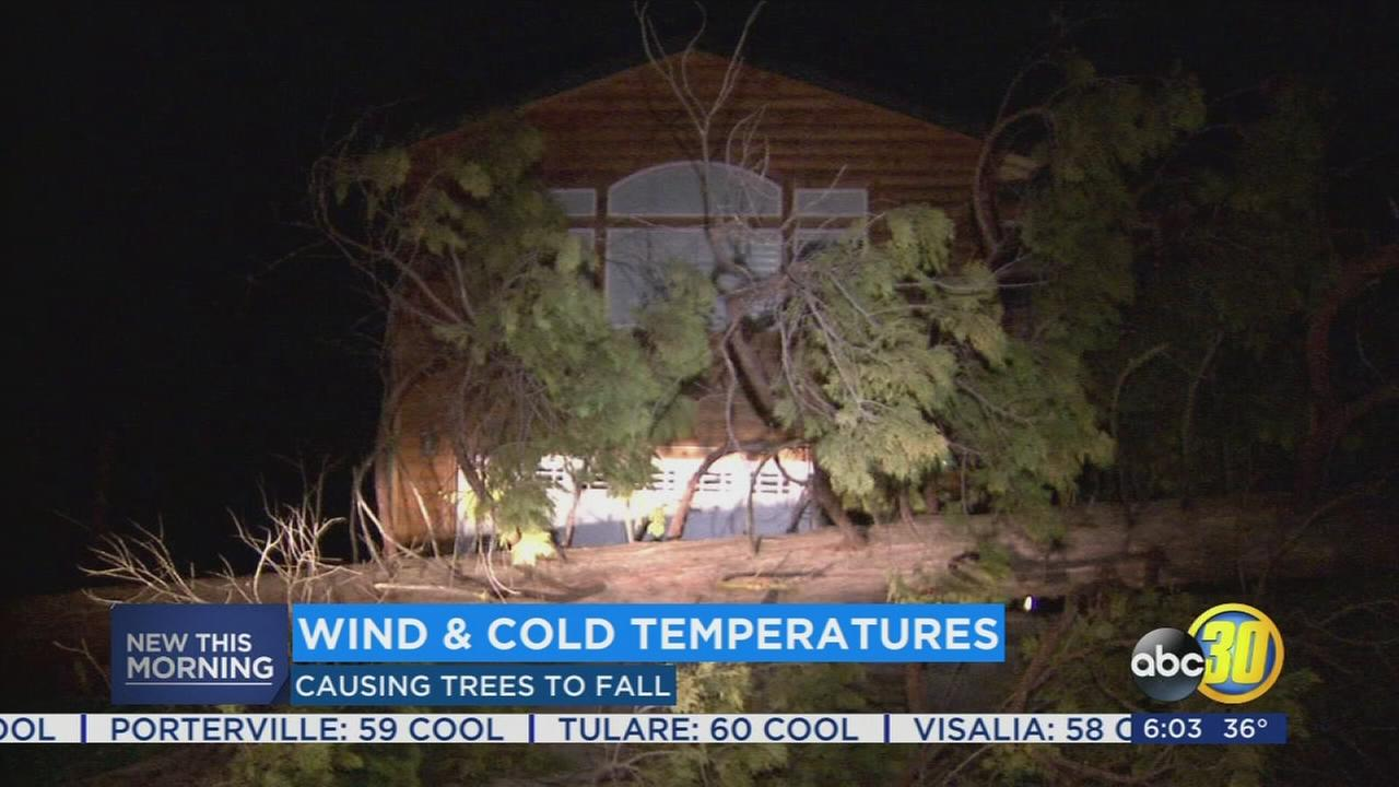 High winds cause chaos in Madera County foothills, downing several trees