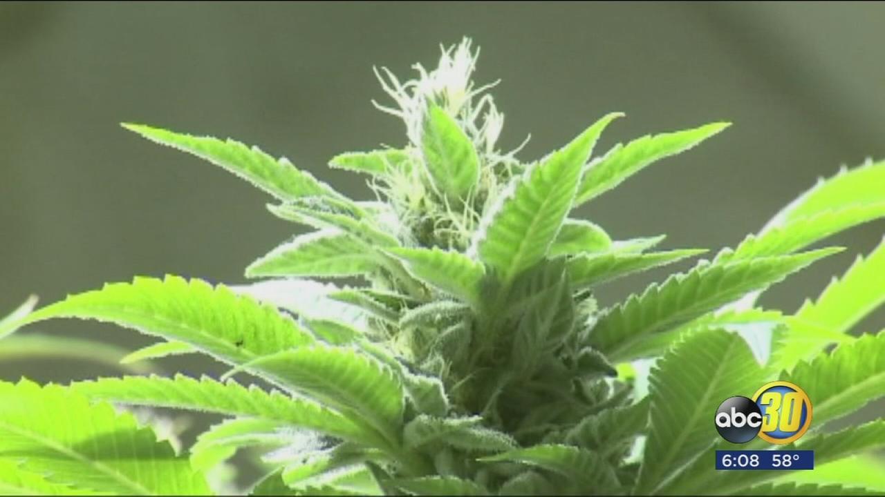 California prepares for sale of recreational marijuana