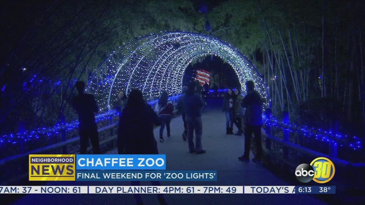 Final Zoo Lifghts of 2017