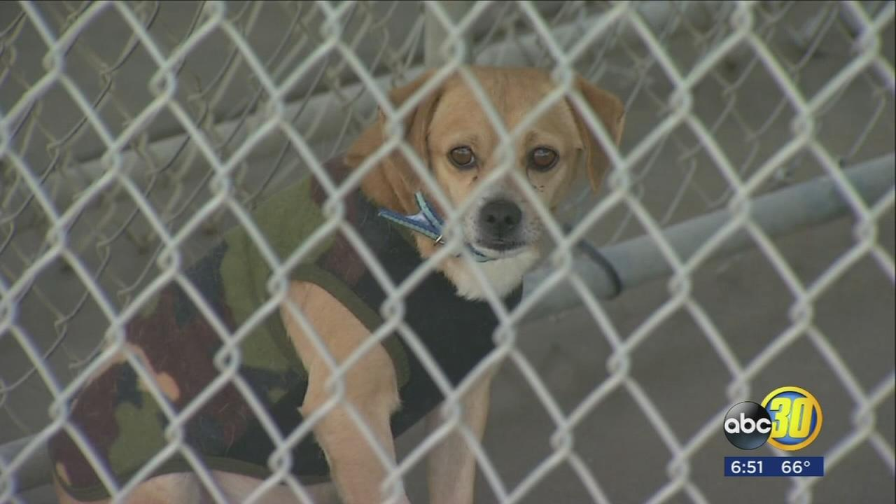 Kings SPCA to reopen months after firing shelter manager for alleged embezzlement