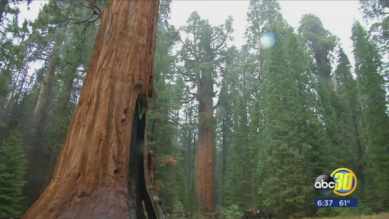 National Park officials tell visitors to leave marijuana at home