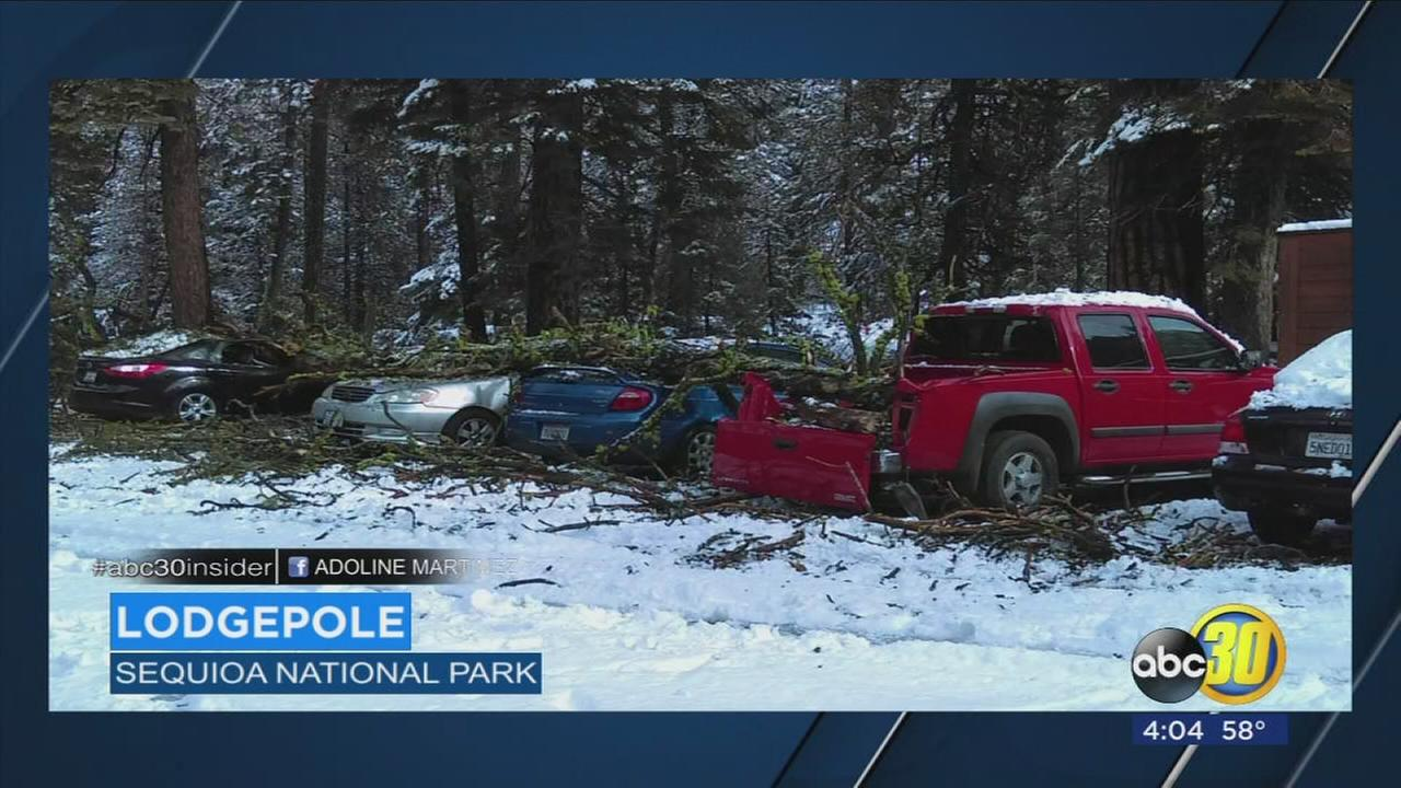 Storm damages mulitple cars in Sequoia National Park
