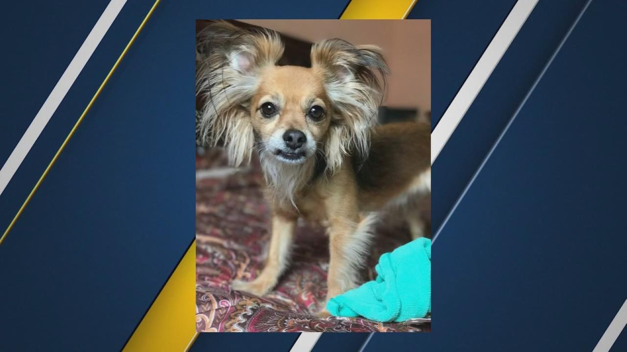 Fresno County Sheriffs K-9 blamed for killing neighbors dog