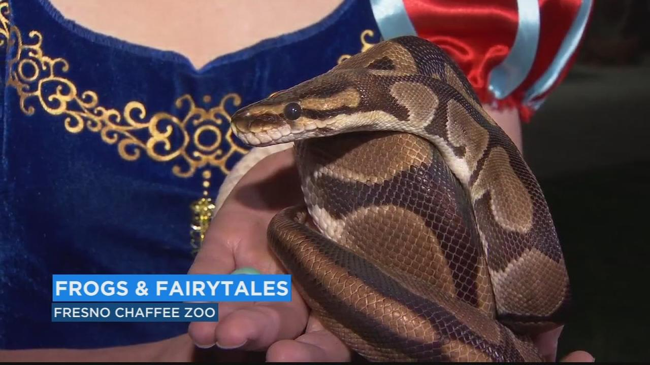 Chaffee Zoo using fairytales to teach about amphibians and reptiles