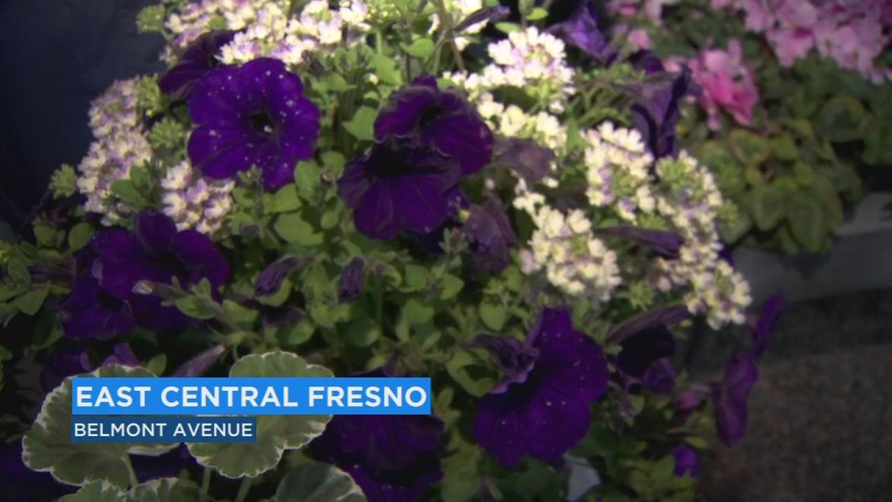 Experts give tips on what to plant this Spring