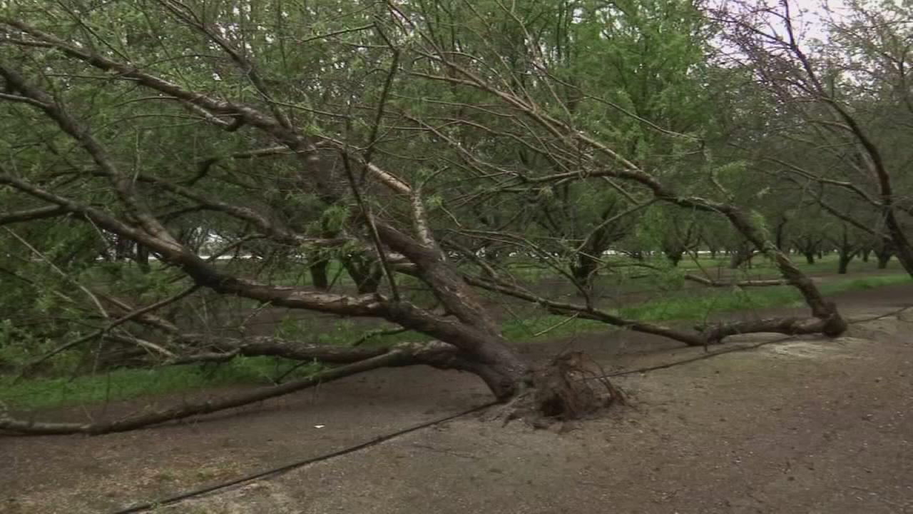 How to know if your tree may fall over