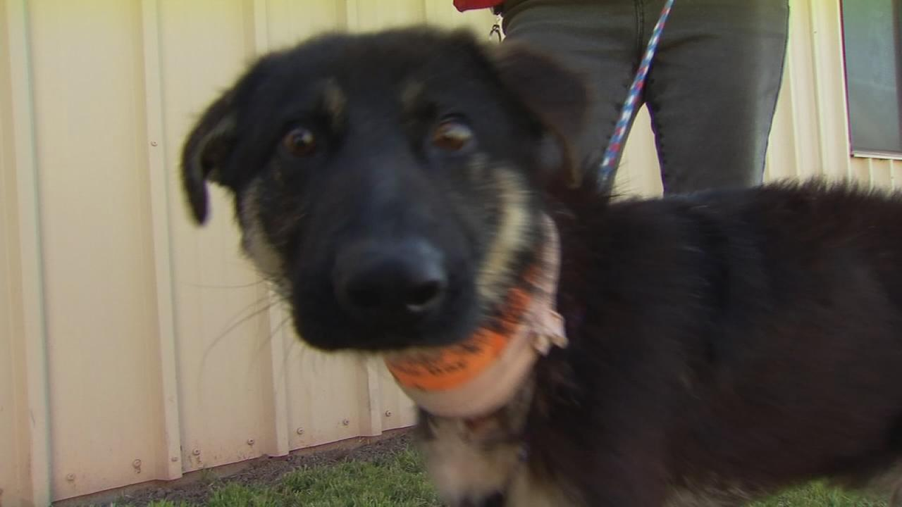 Dog found injured and dumped in field in Madera expected to make full recovery