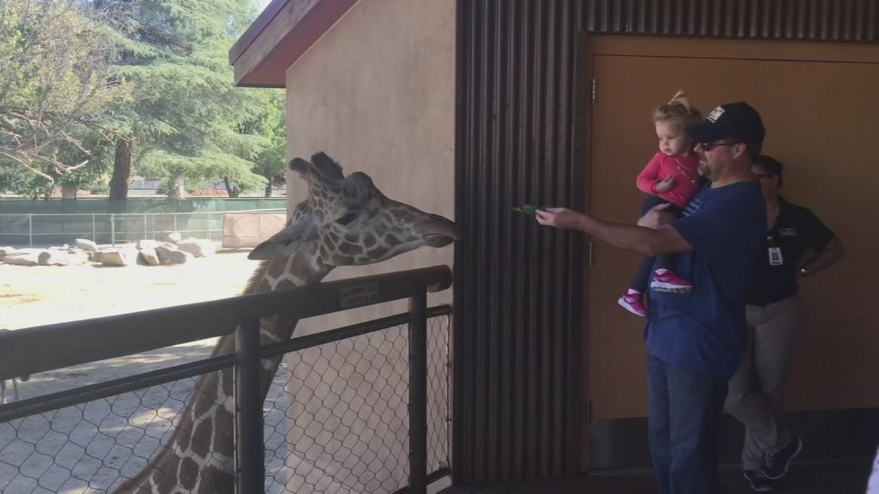Chaffee Zoo giraffe has died