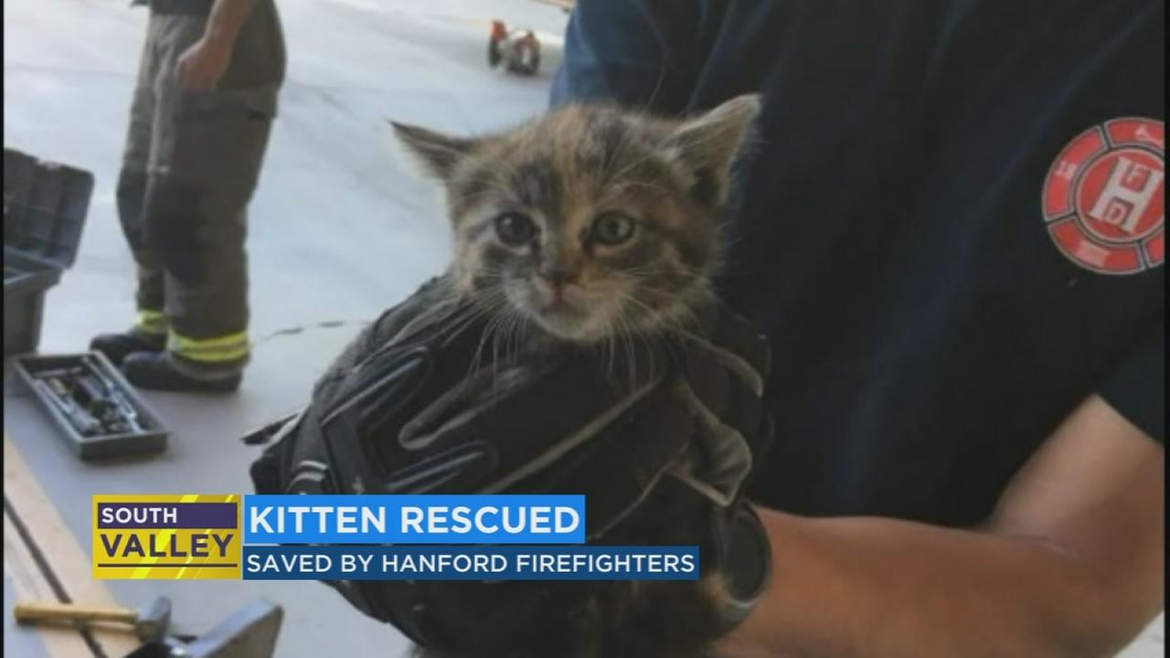 Hanford fire fighters save kitten from front fender of car