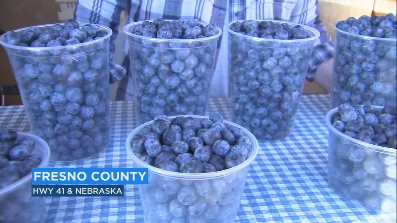 Its blueberry season