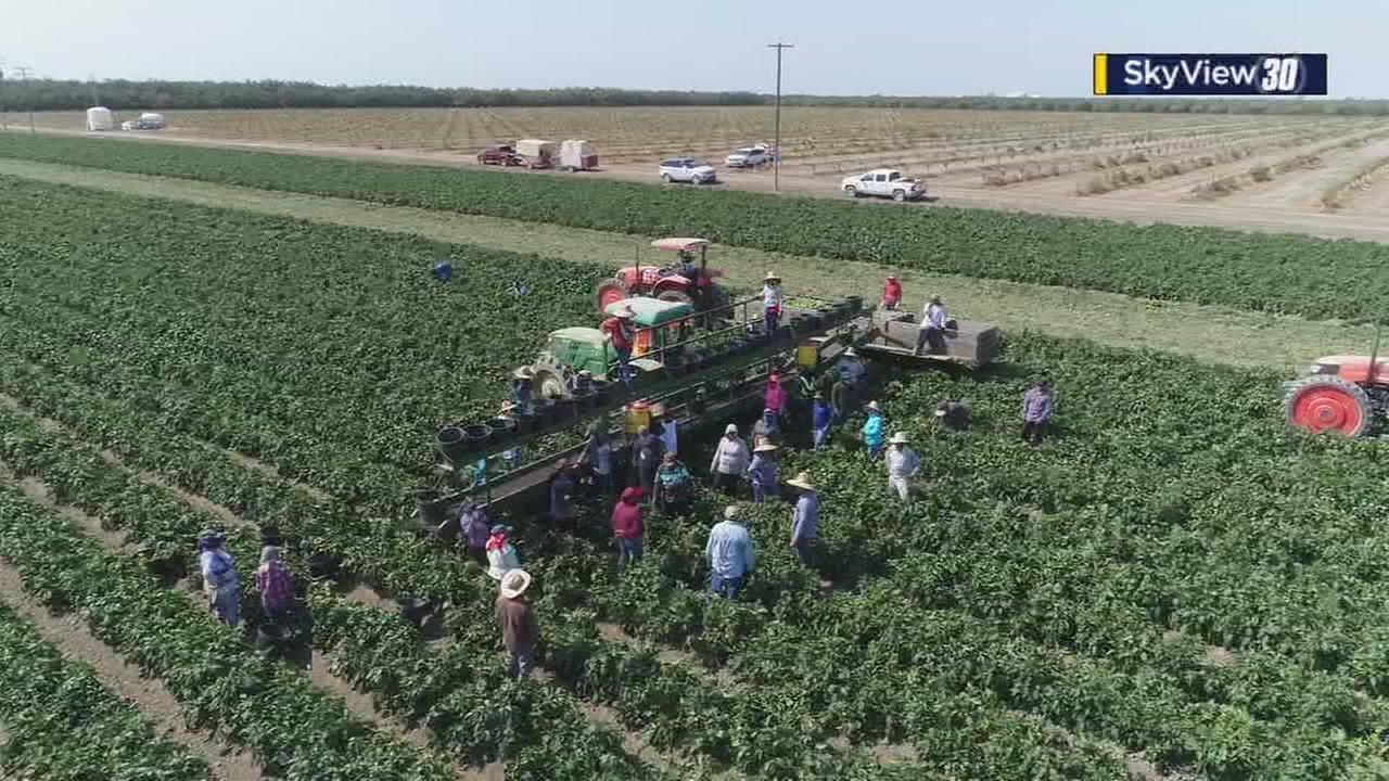 Farmworkers sue EPA over exposure to dangerous pesticides