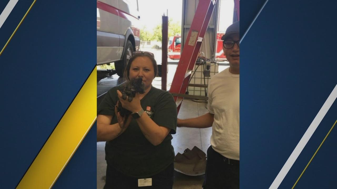 Hanford firefighters rescue kitten trapped under ambulance
