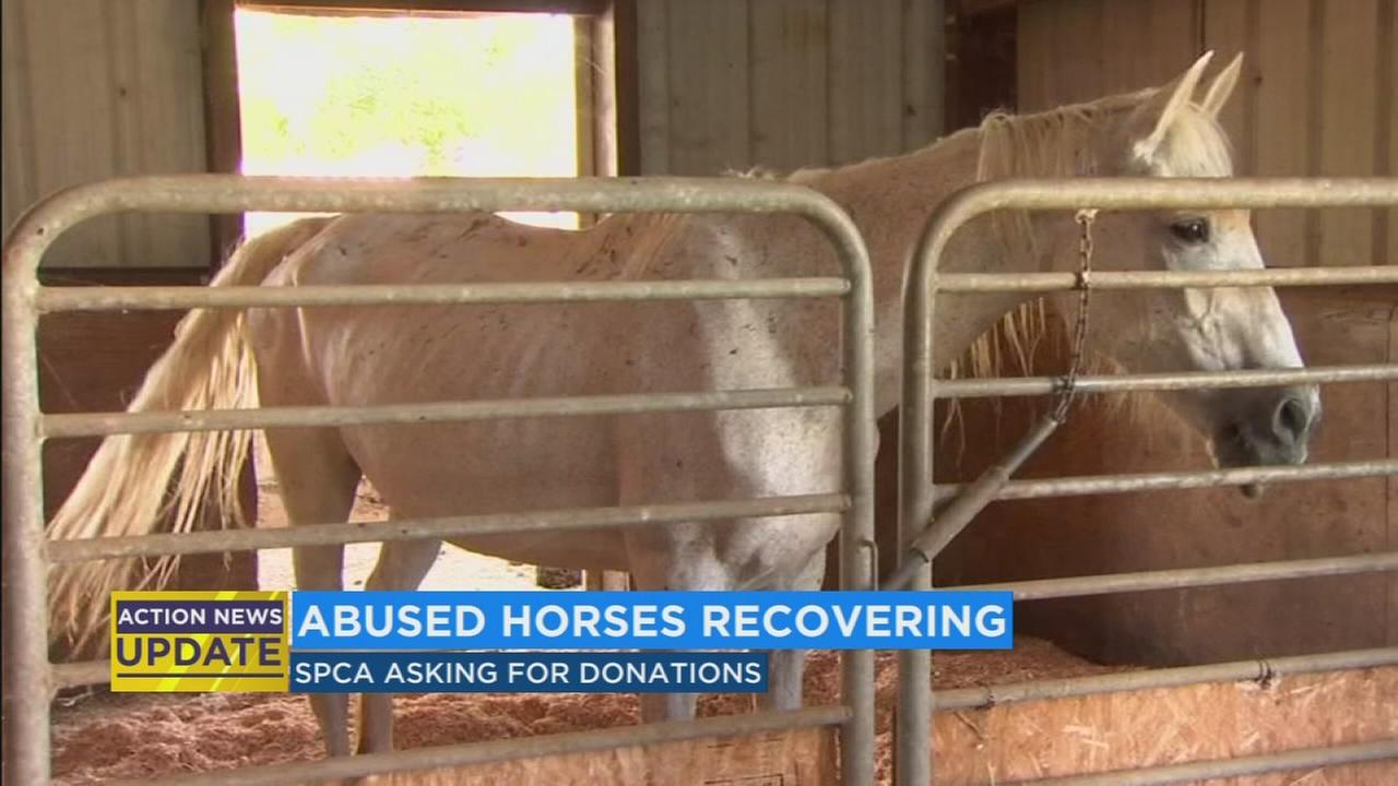 SPCA needs donations for malnourished horses rescued from Fresno home