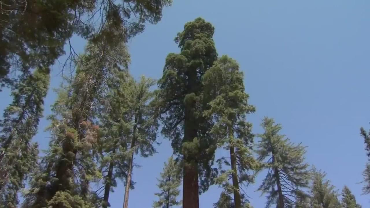 Yosemites Mariposa Grove improvements completed