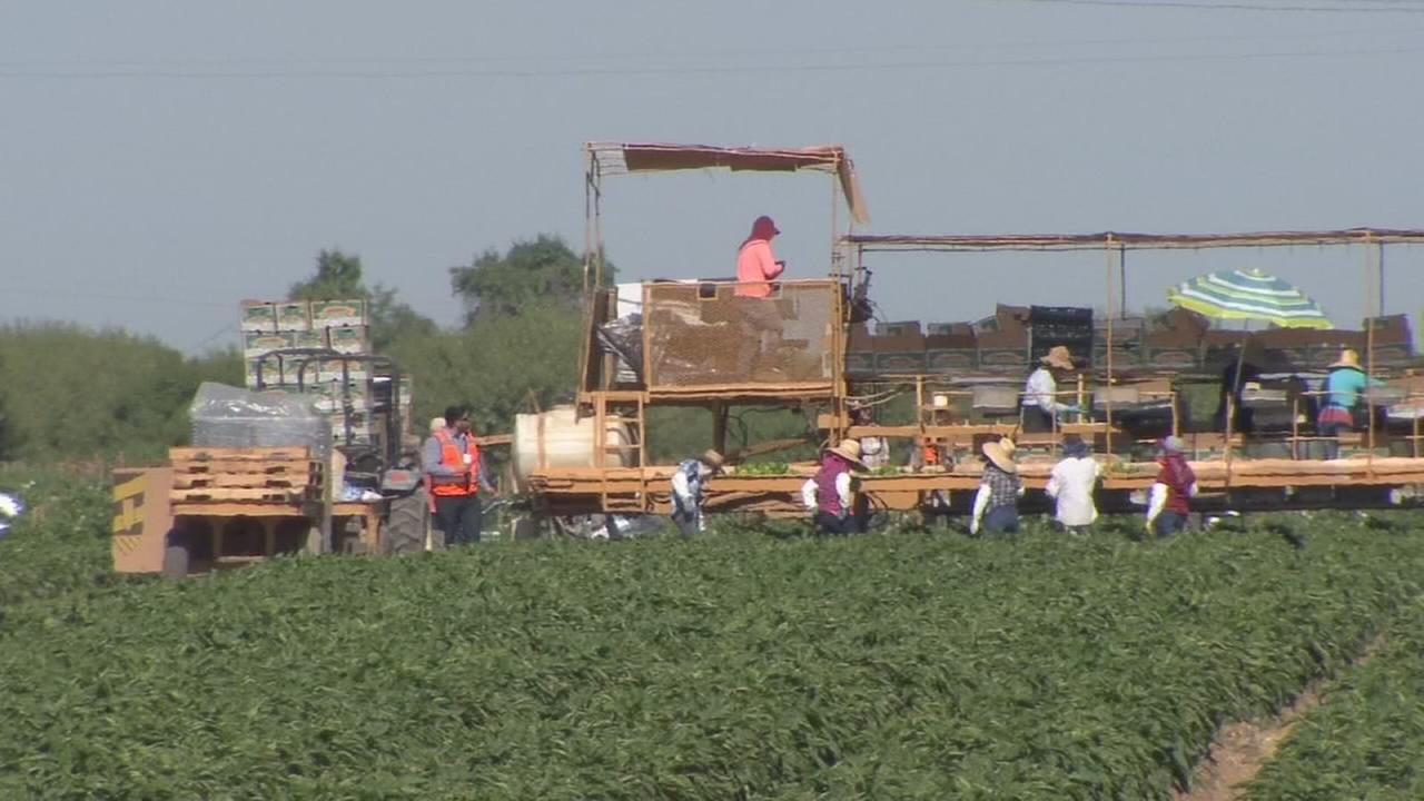 Farmers taking steps to protect workers in summer heat