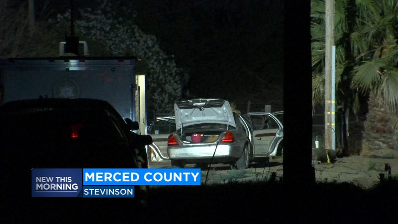 Deputies seize 100 marijuana plants after a man was shot in Merced County
