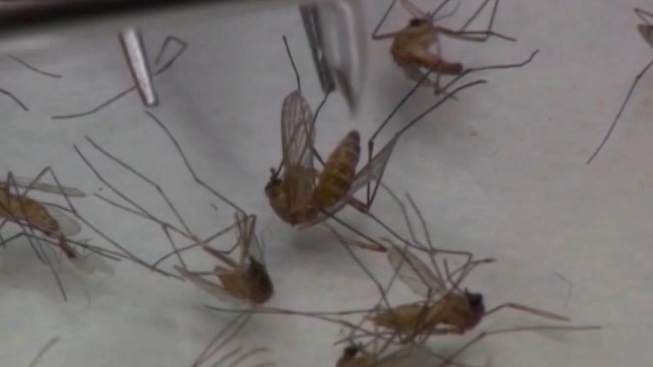 Mosquitoes test positive for St. Louis Encephalitis in Central Fresno