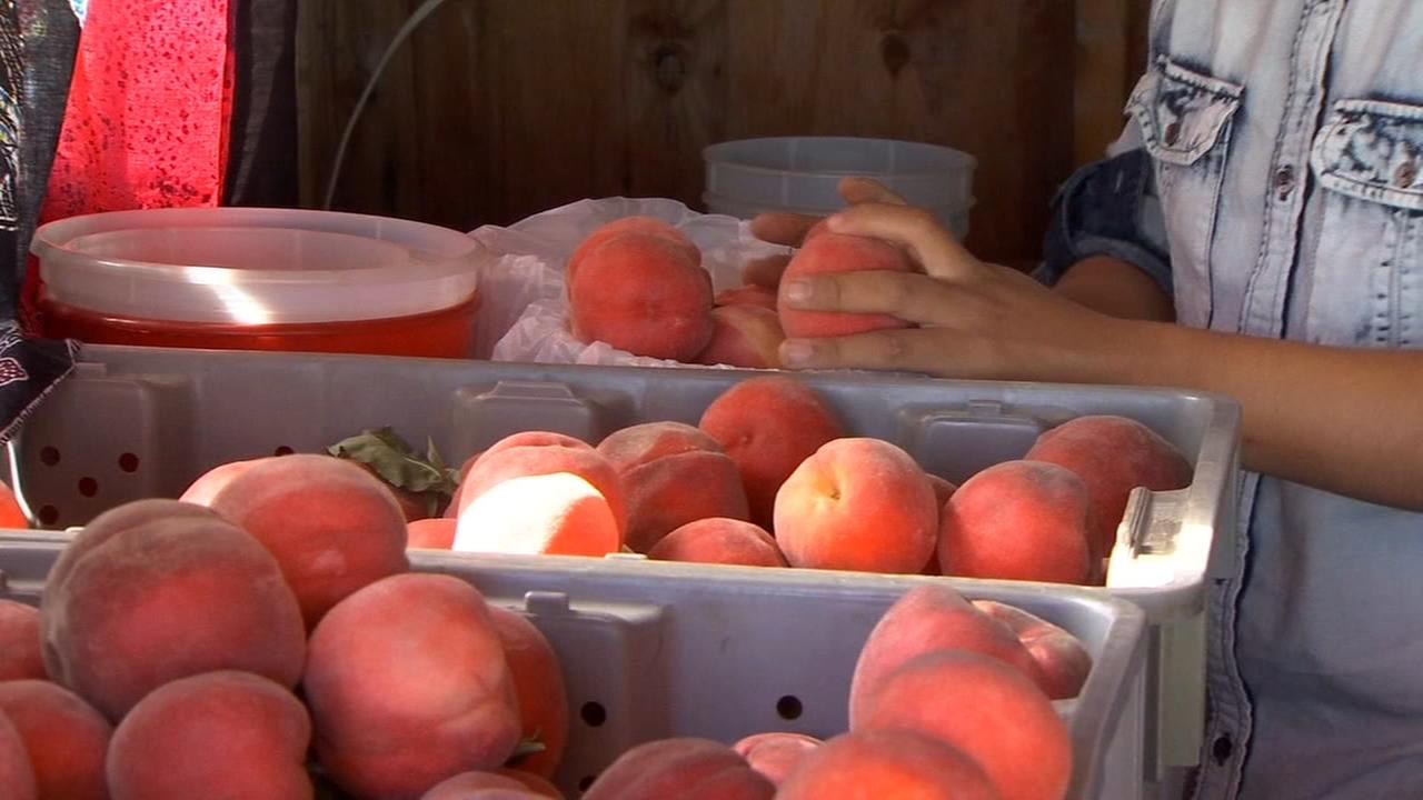 Made in the Valley: Peach on Earth Farms