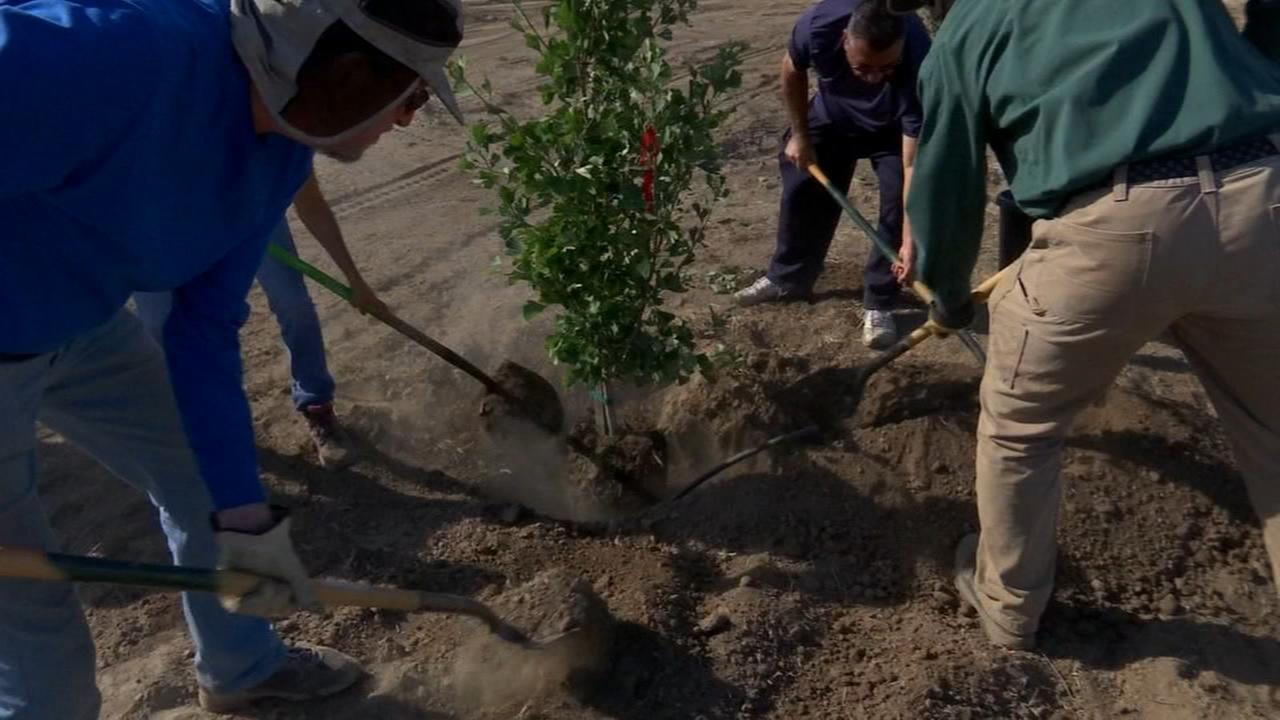 Tree Fresno breathing new life into an empty lot in Southwest Fresno