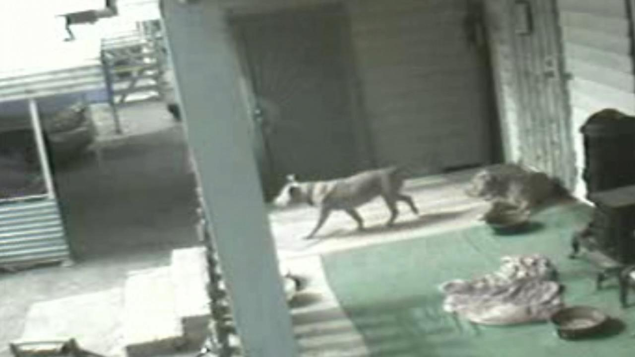 Man furious after Merced Co DA investigators kill his dog and urinate near his fence