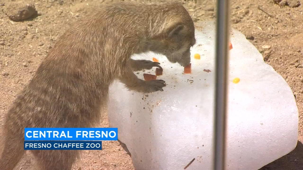 Chaffee Zoo animals kept cool in scorching heat