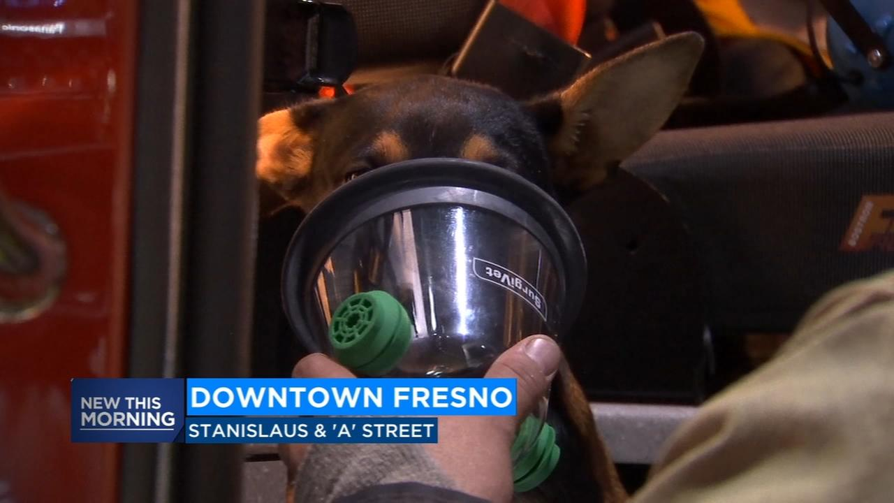 Firefighters save puppy from burning home in Downtown Fresno