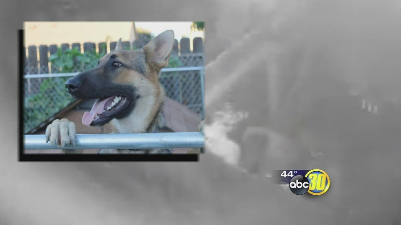Caught on camera: Dog beaten to death in Merced