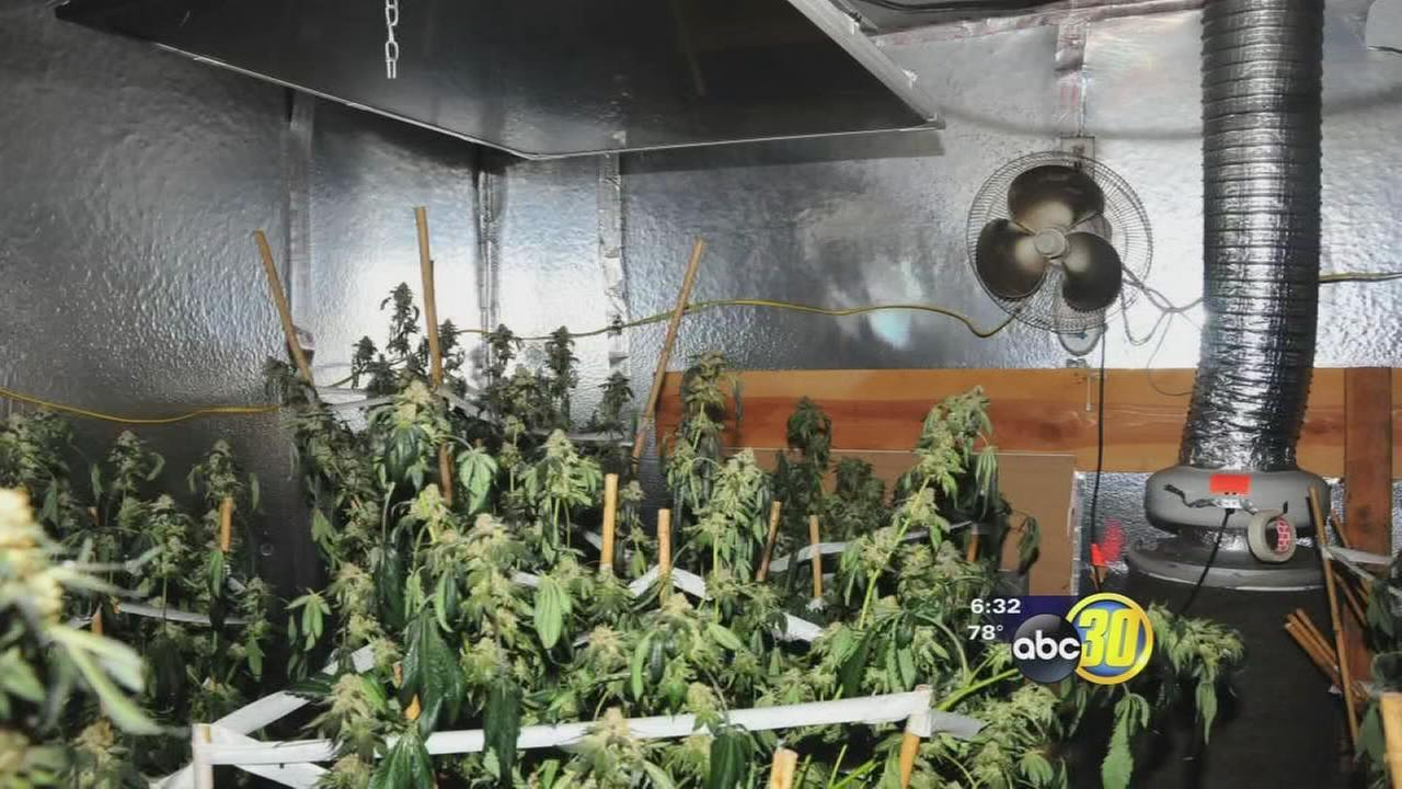 Marijuana grow found inside Central Fresno tire shop after ...