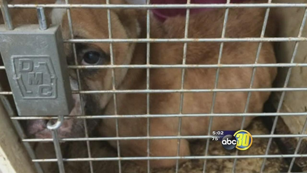 Abandoned dog left in crate in Fresno