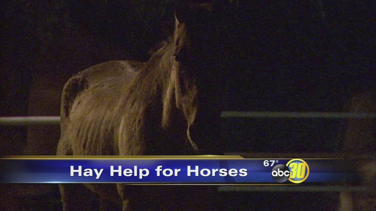 Exeter horse rescue shelter in need of donations