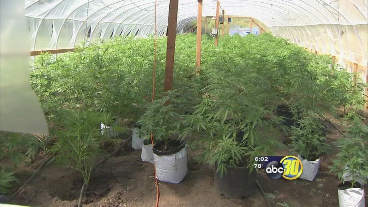Pot farm bust near Auberry yields 7 arrests