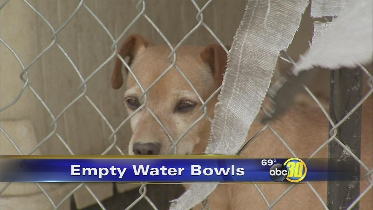 Pinky Paws Rescue in Selma scrambles to keep dogs hydrated