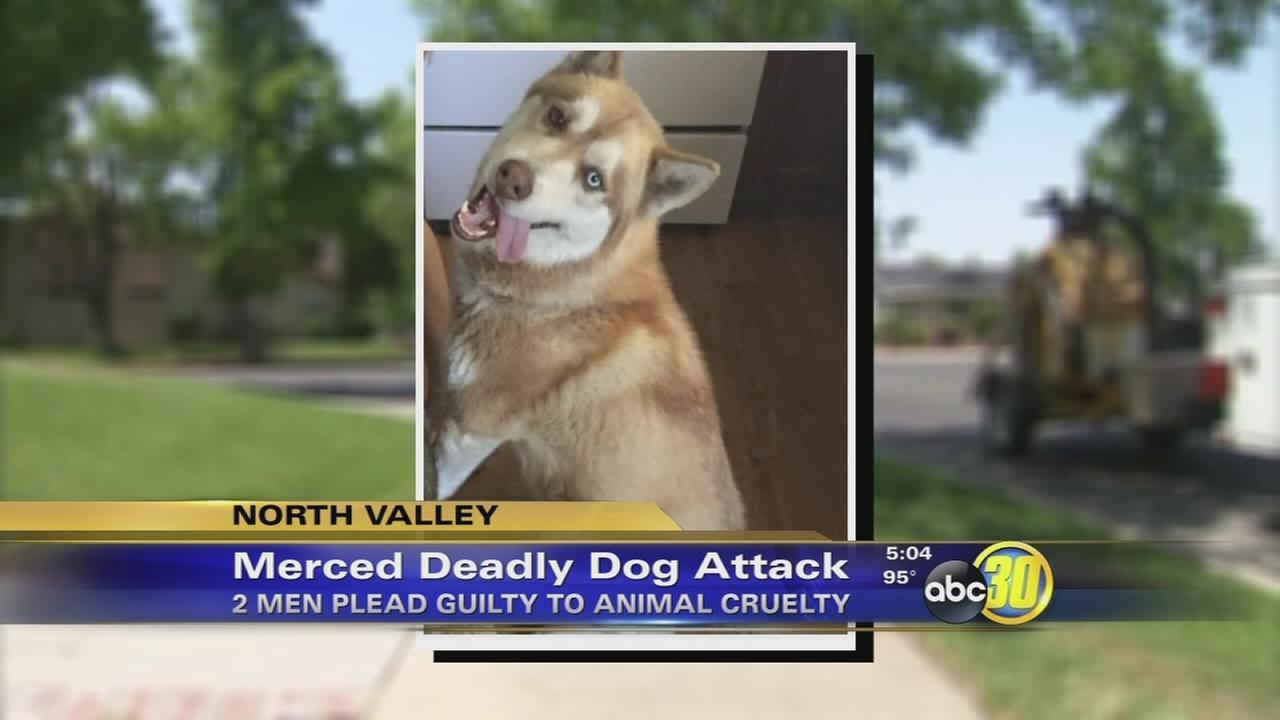 2 plead guilty in Merced machete attack on dog
